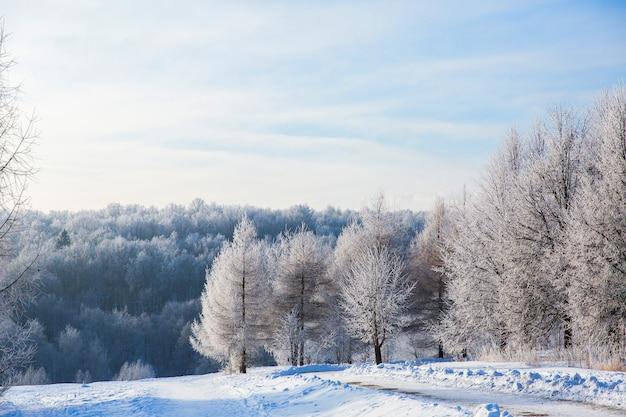 Witte sneeuwbomen in de winterbos en duidelijke blauwe hemel. prachtig landschap
