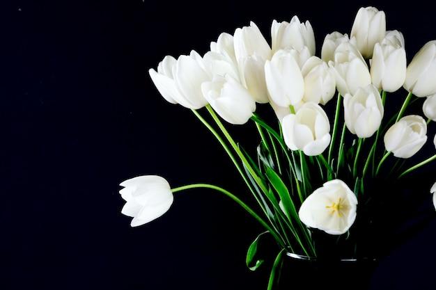 Witte tulipson