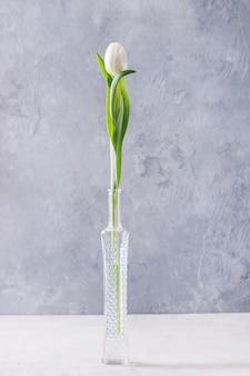 Witte tulp in fles