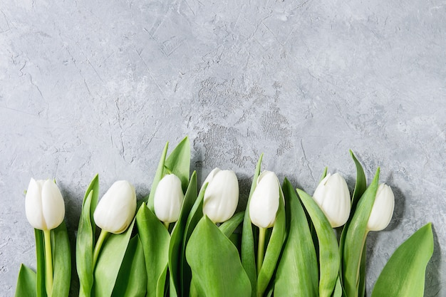 Witte tulpen over grijs