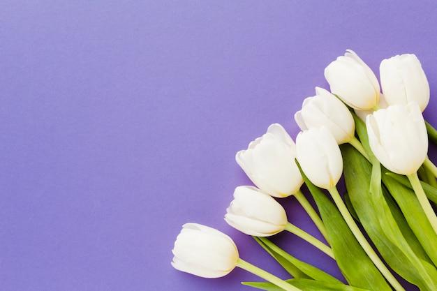 Witte tulpenbloemen met exemplaar ruimteachtergrond