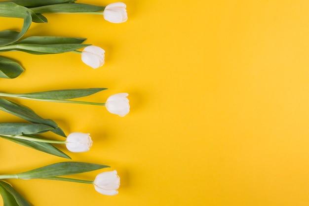 Witte tulpenbloemen op gele lijst