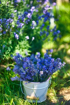 Witte vaas met lavendelboeket op vintage stoel, op lavendelveldachtergrond