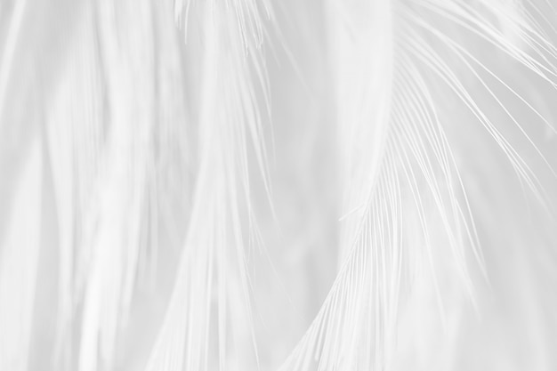 Witte veren textuur achtergrond