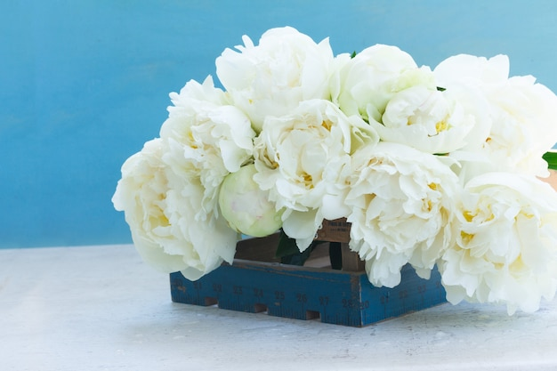 Witte verse bloomig peony bloemen op blauwe achtergrond