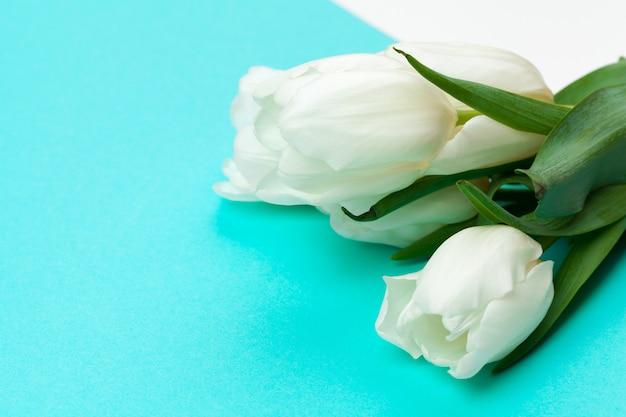 Witte verse tulpen op kleurblokdocument