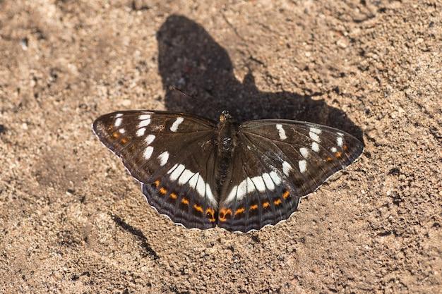 Witte vlinder zittend op het zand