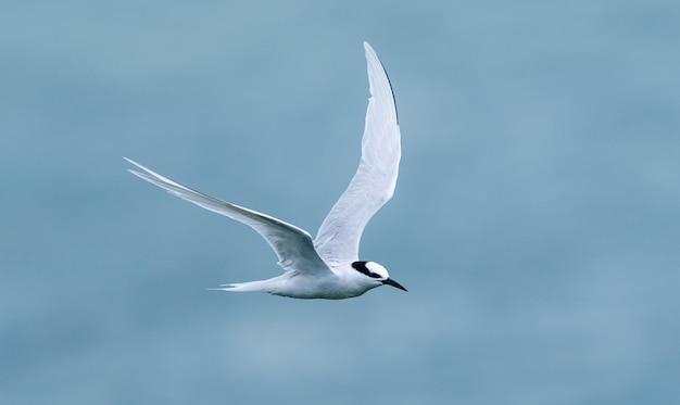 Witte vogel die boven de zee vliegt