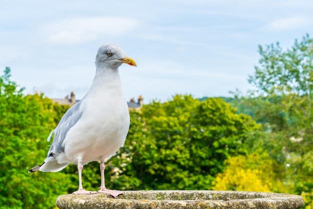 Witte vogel met bomen en lucht