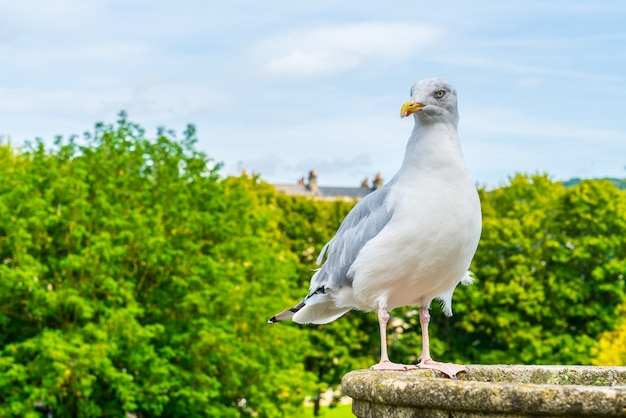 Witte vogel met boom. en lucht
