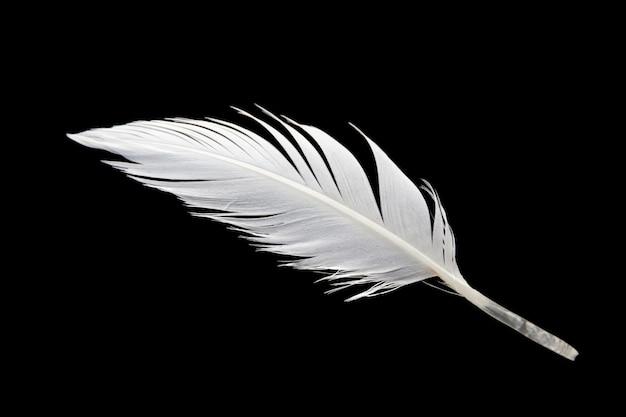 Witte vogel vleugel veer geïsoleerd op zwarte achtergrond