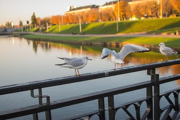 Witte vogels zaten op de reling van de brug