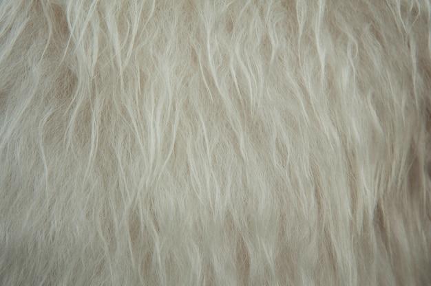 Witte zachte de textuur van de schapenwol achtergrond als achtergrond. pluizige vacht.