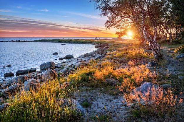 Witte zee op de solovetsky-eilanden, de kaap der labyrinten, stenen en gras in de stralen van de ondergaande zon
