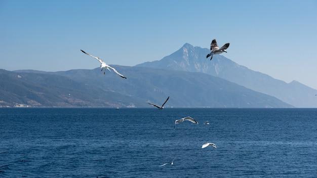 Witte zeemeeuw die in de blauwe zonnige hemel over de kust van de zee vliegt