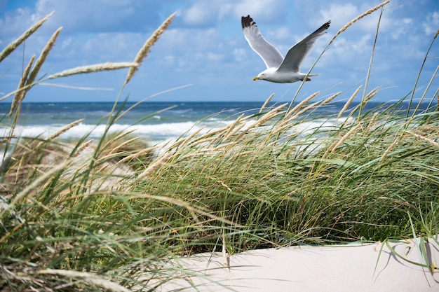 Witte zeemeeuw die over de kust vliegt