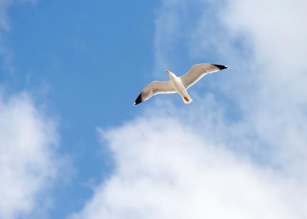 Witte zeemeeuw in de blauwe hemel