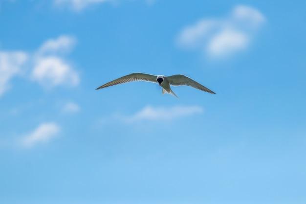 Witte zeemeeuw in de blauwe lucht met witte wolken