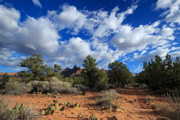 Woestijnlandschap in het zuidwesten