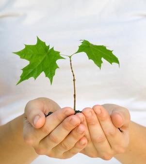 Wooman houdt een plant tussen handen op wit