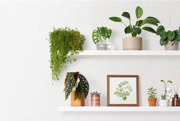 Woondecoratie kamerplant plank