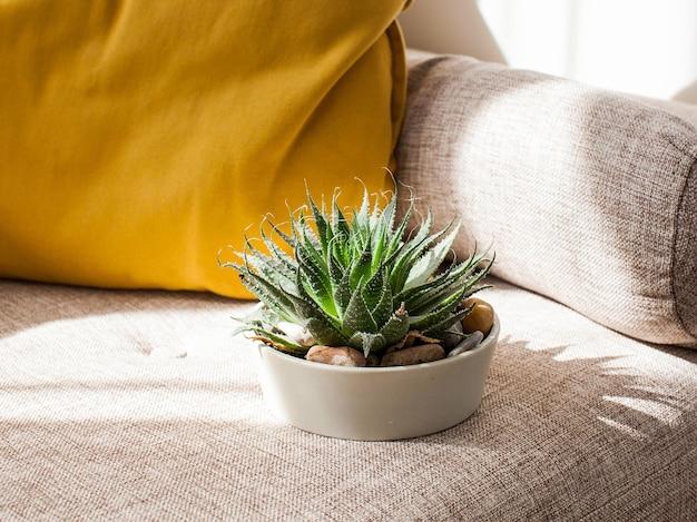Woonplant vetplant in een pot in een scandinavisch interieur. concept van huisplanten.