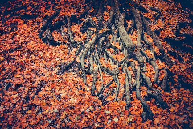 Wortels van boom met droge bladeren