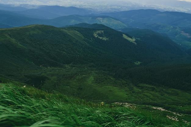Woud. groene berg boslandschap. mistig bergbos. fantastisch boslandschap. bergbos in wolkenlandschap. mistig bos. berg boslandschap. donker bos in nevellandschap.
