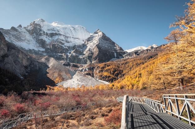 Xiannairi heilige berg met gouden dennenbos in de herfst in yading