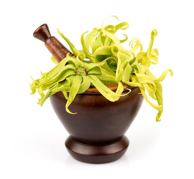 Ylang-ylang of cananga odorata bloemen geïsoleerd op wit
