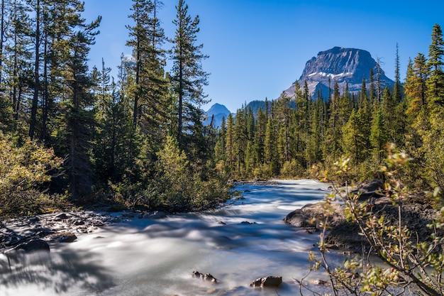 Yoho-rivier met wapta-berg en een bos