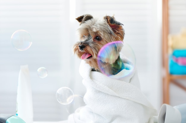 Yorkiepuppy omringd door zeepbels
