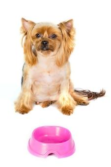 Yorkshire terrier hond zit in de buurt van zijn etensbak