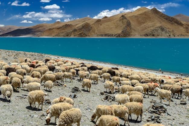 Yumtsomeer van yamdrok in tibet