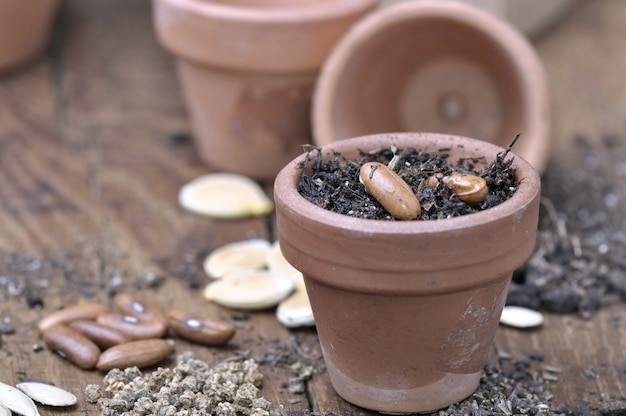 Zaad in kleine pot