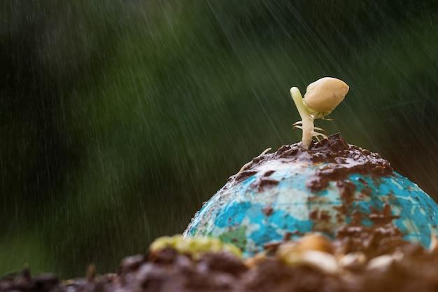 Zaaiende plant op klei globe model op een zonnige dag regent