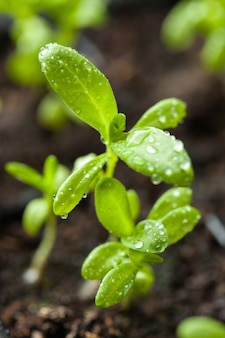 Zaailing planten groeien in kieming plastic bakje