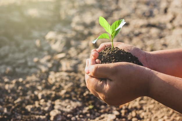 Zaailingen groeien in de handen van kinderen die op het punt staan in droge grond, milieuconcept te planten.
