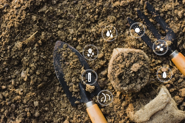 Zaailingen groeien in de handen van kinderen die op het punt staan in droge grond te planten