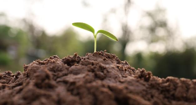Zaailingen groeien in de natuur, het concept van bedrijfsgroei en natuurbehoud.