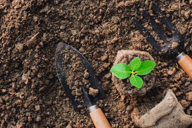 Zaailingen groeien in een kleine zak.