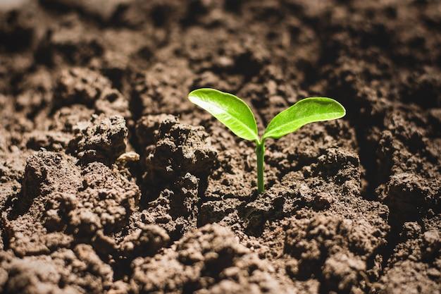 Zaailingen groeien uit droge grond.