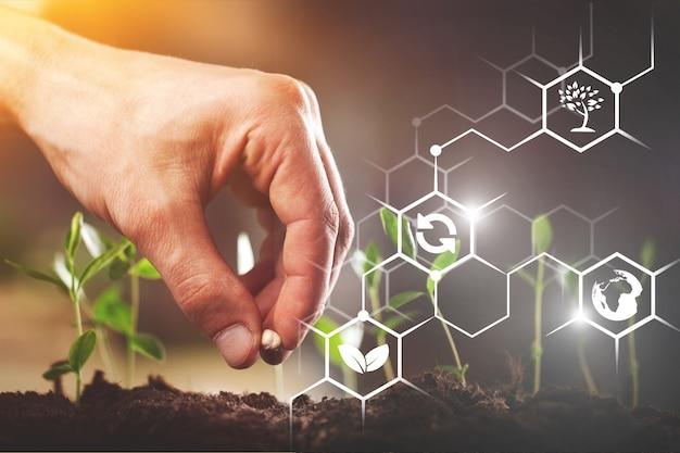 Zaailingen groeien uit vruchtbare grond