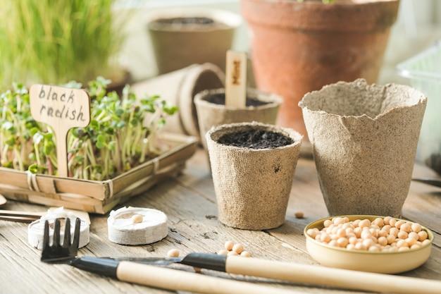 Zaailingen in biologisch afbreekbare potten op houten tafel. groene planten in turfpotten. trays voor microgroenten in de landbouw.
