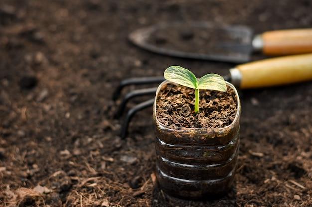 Zaailingen in gerecyclede plastic flessen op de grond, concepten voor het planten van bomen en opwarming van de aarde.