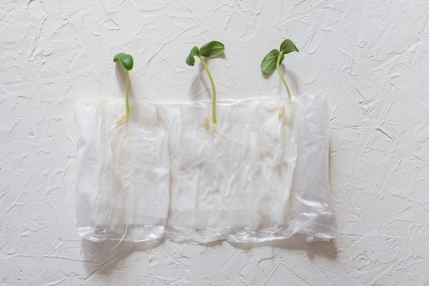 Zaailingen kweken zonder grond in papier