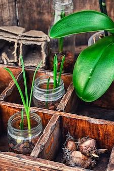 Zaailingen lente planten