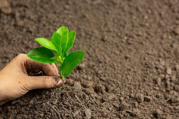 Zaailingen met de hand in de grond planten