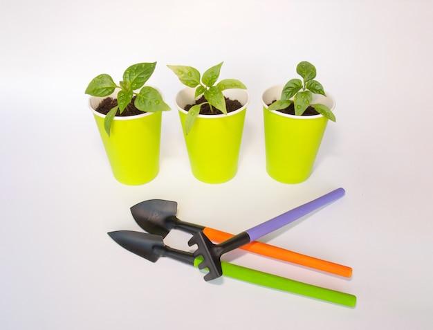 Zaailingen van peper in groene potten met tuinhulpmiddelen