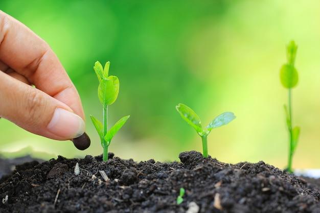 Zaailingen worden gekweekt uit de grond en hand planten een zaadje in de bodem landbouw